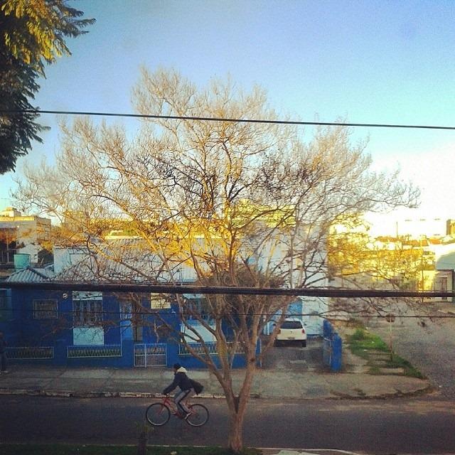 mesma árvore da primeira foto, agora no inverno.